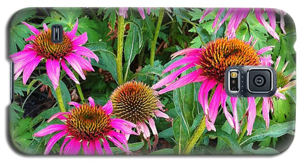 Comely Coneflowers Galaxy S5 Case by Meghan at FireBonnet Art