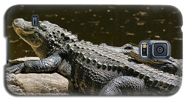 Comfy Cozy Galaxy S5 Case by Lois Bryan