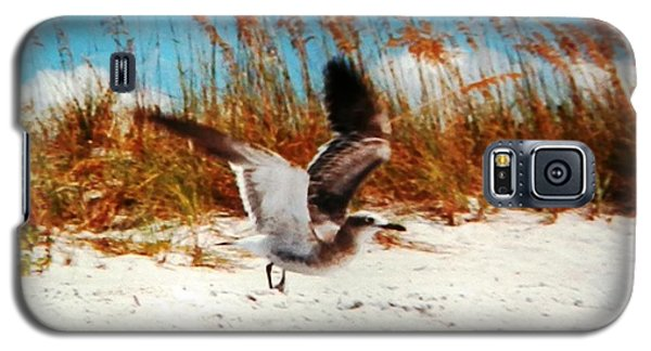 Windy Seagull Landing Galaxy S5 Case