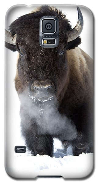 Bison Galaxy S5 Case - Coming Through by Deby Dixon