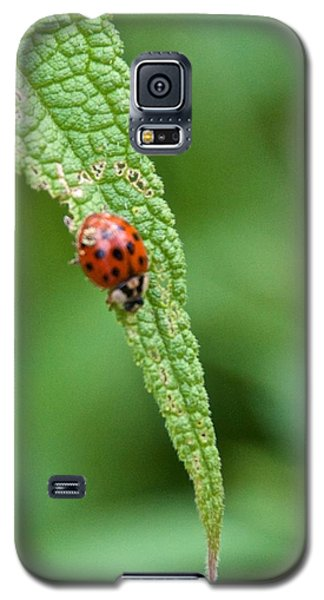 Coming To The End Of The Leaf Galaxy S5 Case