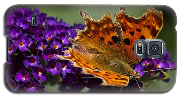 Galaxy S5 Case featuring the photograph Comma Butterfly On Buddleia by Shirley Mitchell