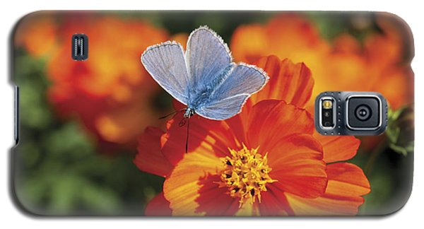 Galaxy S5 Case featuring the photograph Common Blue Butterfly by Lana Enderle