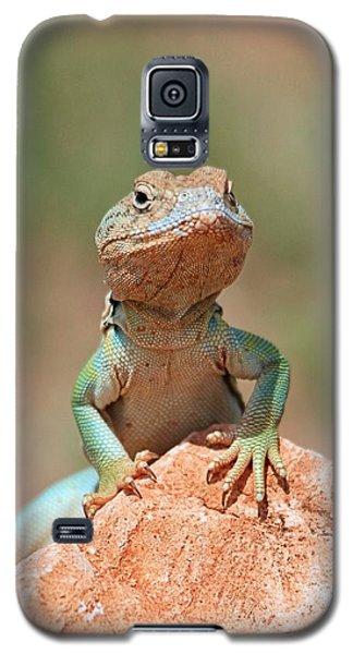 Common Collared Lizard 2 Galaxy S5 Case by Elizabeth Budd