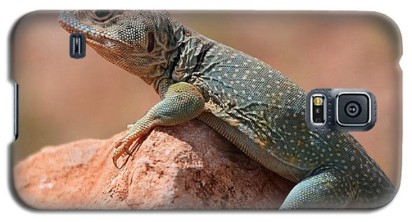 Galaxy S5 Case featuring the photograph Common Collared Lizard by Elizabeth Budd