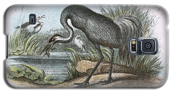 Common Crane Galaxy S5 Case by English School