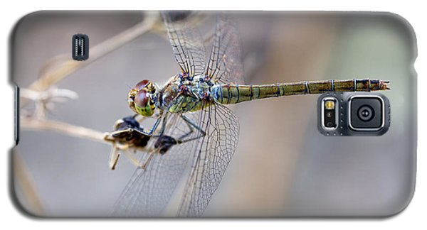 Common Darter Female On Crete Galaxy S5 Case