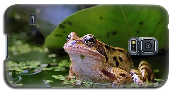Galaxy S5 Case featuring the digital art Common Frog by Ron Harpham