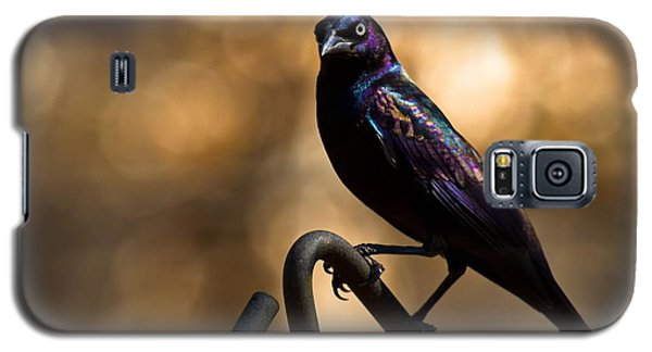 Common Grackle Galaxy S5 Case