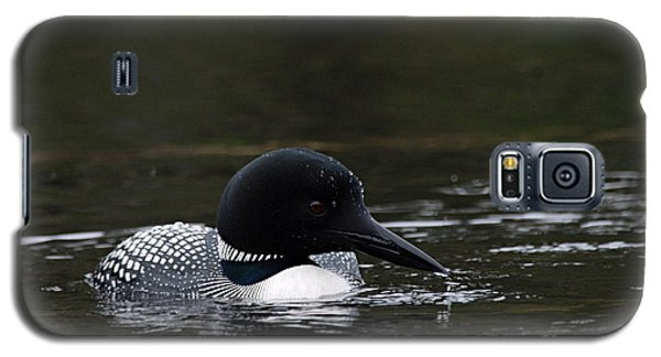 Common Loon 1 Galaxy S5 Case