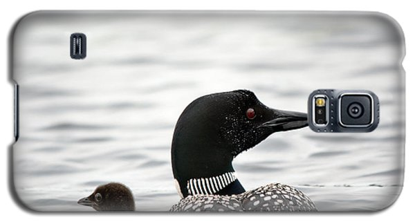 Common Loon And Baby Galaxy S5 Case