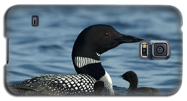 Common Loon Family Galaxy S5 Case by James Peterson