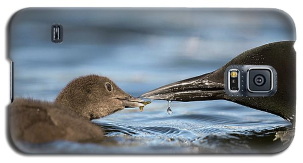 Loon Galaxy S5 Case - Common Loon Feeding Chick by Dr P. Marazzi