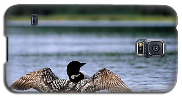 Common Loon Galaxy S5 Case by Mark Newman