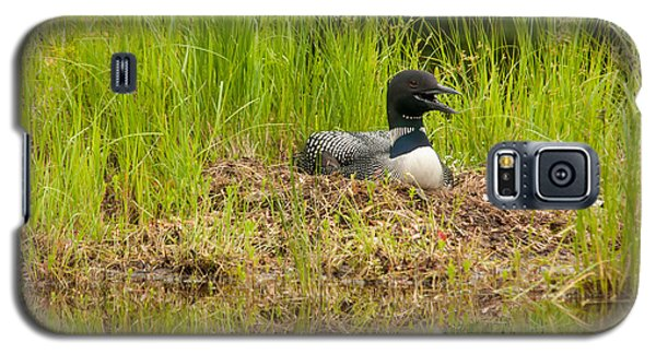 Galaxy S5 Case featuring the photograph Common Loon Nesting by Brenda Jacobs