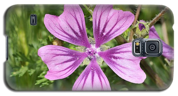 Common Mallow Flower Galaxy S5 Case by George Atsametakis