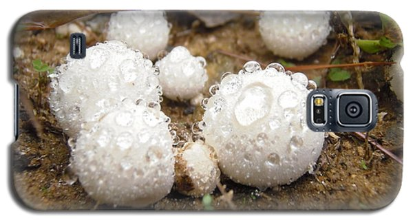 Common Puffball Dewdrop Harvest Galaxy S5 Case