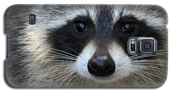 Common Raccoon Galaxy S5 Case