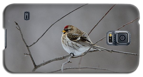 Galaxy S5 Case featuring the photograph Common Redpoll by David Porteus