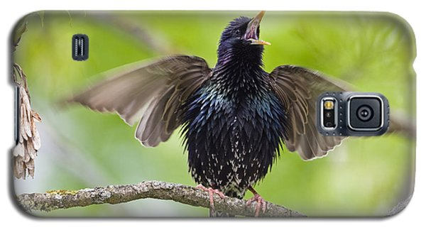 Common Starling Singing Bavaria Galaxy S5 Case by Konrad Wothe