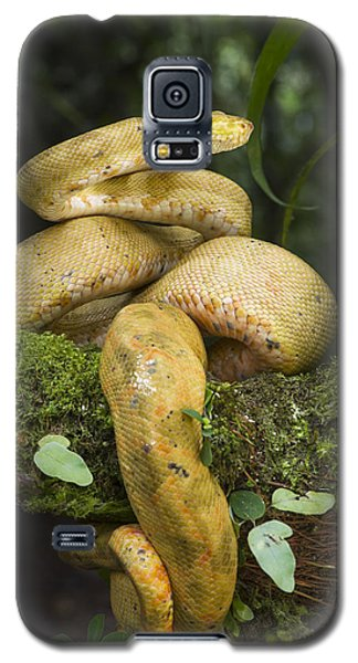 Common Tree Boa -yellow Morph Galaxy S5 Case by Pete Oxford