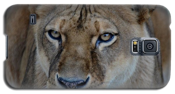 Concerned Lioness Galaxy S5 Case