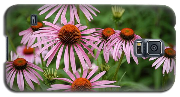 Cone Flowers Galaxy S5 Case by Donald Williams