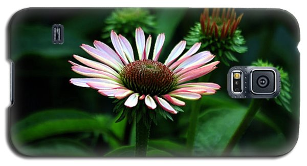 Galaxy S5 Case featuring the photograph Coneflower 2014 by Marjorie Imbeau