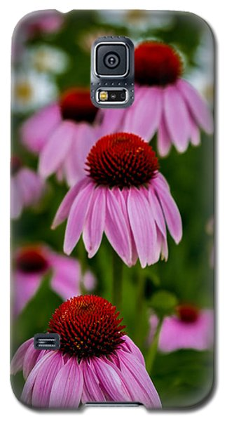 Coneflowers In Front Of Daisies Galaxy S5 Case