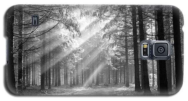 Coniferous Forest In Early Morning Galaxy S5 Case