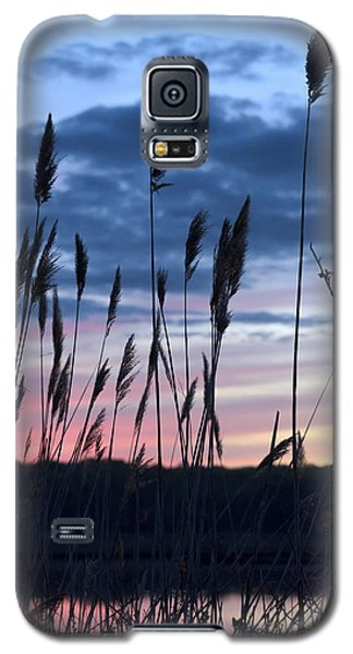 Connecticut Sunset With Reeds Series 4 Galaxy S5 Case by Marianne Campolongo