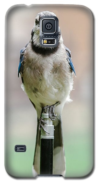 Galaxy S5 Case featuring the photograph Contemplative Blue Jay by Jim Moore