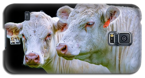 Contrast Cows Galaxy S5 Case