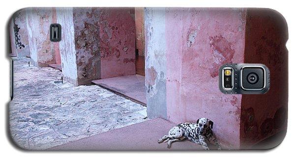 Convent Dog Galaxy S5 Case