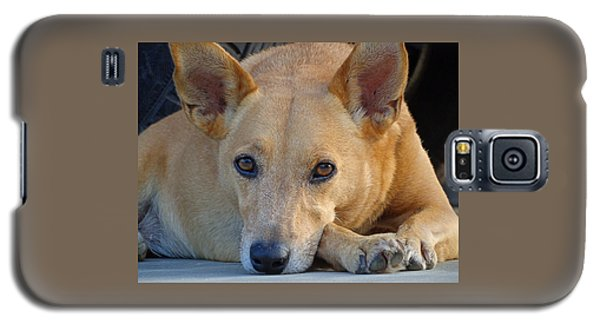 Cookie Chillin'  Galaxy S5 Case