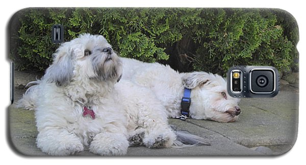 Galaxy S5 Case featuring the photograph Havanese Dog Sisters B by Laurie Tsemak