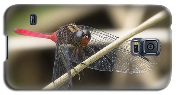 Cool Dragon Fly 0001 Galaxy S5 Case by Kevin Chippindall