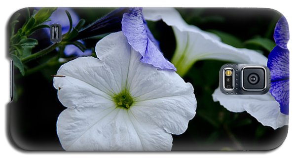 Cool Summer Petunias Galaxy S5 Case by Wilma  Birdwell