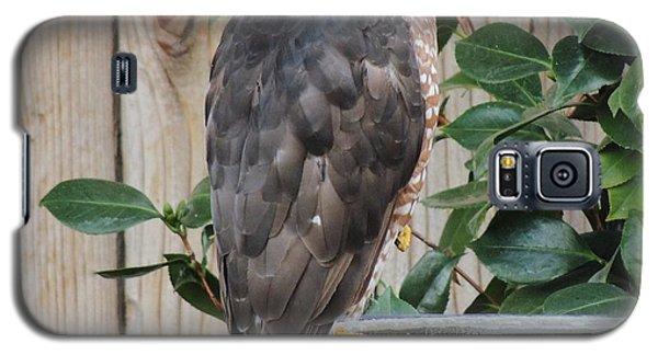 Coopers Hawk 1 Galaxy S5 Case