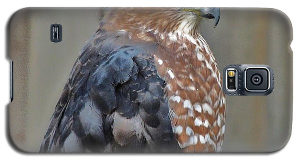 Coopers Hawk 3 Galaxy S5 Case