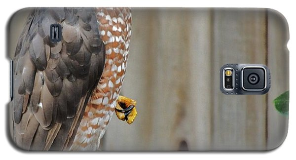 Coopers Hawk 4 Galaxy S5 Case