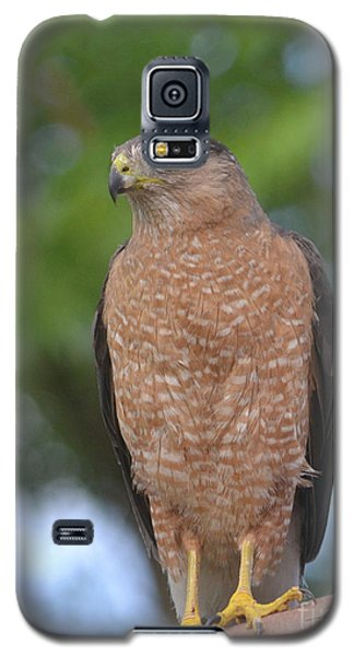 Cooper's Hawk I Galaxy S5 Case by Suzette Kallen