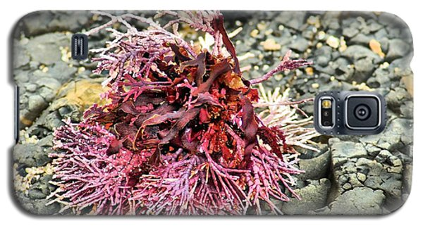 Coral I Galaxy S5 Case by Bob Wall