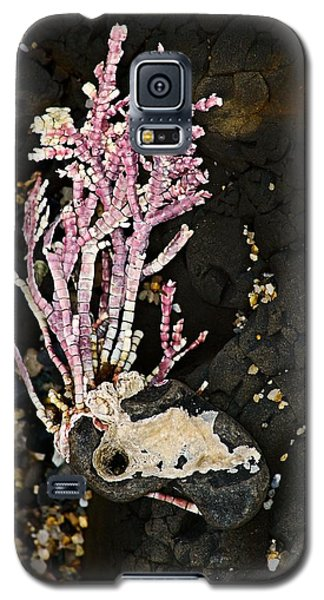 Galaxy S5 Case featuring the photograph Coral II  by Bob Wall