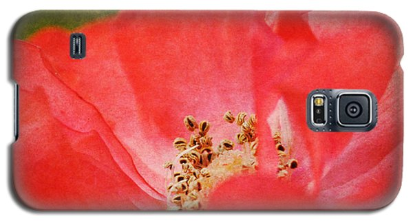 Coral Rose Galaxy S5 Case by Kelly Nowak