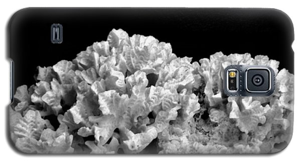 Still Life Galaxy S5 Case - Corals 350 by Angela Seager