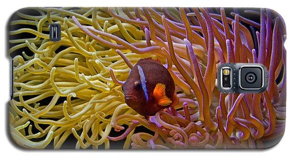 Corals Galaxy S5 Case