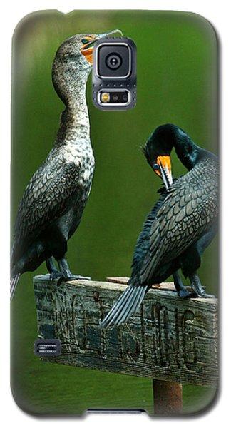 Cormorant Courtship Galaxy S5 Case