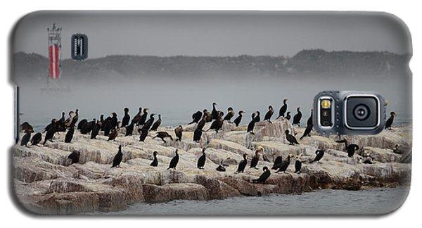 Galaxy S5 Case featuring the photograph Cormorant Island by Debra Martz