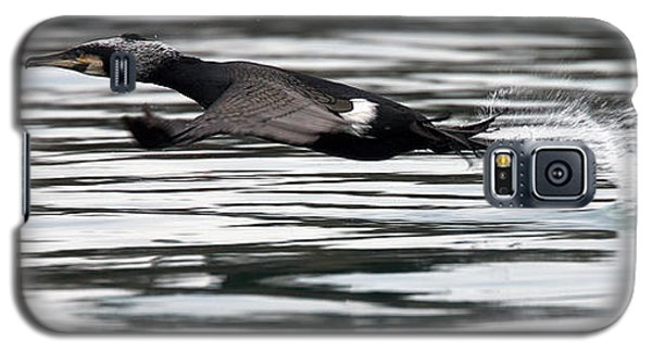 Cormorant Taking Off From The Sea Galaxy S5 Case